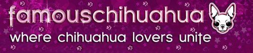 famous chihuahua website
